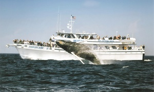Cape Ann Whale Watch: $28 for a Whale-Watching Cruise from Cape Ann Whale Watch (Up to $48 Value)