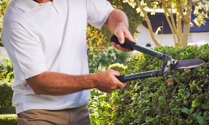 Monster Tree Service - Salt Lake City: $99.99 for Three Man-Hours of Tree and Shrub Pruning from Monster Tree Service ($375 Value)