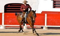 Spectacle équestre et taurin « TORISSIMO 2016 » pour 1 ou 2 personnes dès 19,99 € avec Doma Vaquera France