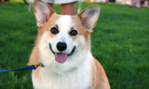 Up to 63% Off Pet Grooming at Packerland Veterinary Center, Ltd., plus 6.0% Cash Back from Ebates.