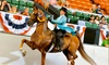 Chase Farms - Hollis: Three or Six Private Horse-Riding Lessons from Chase Farms (50% Off)