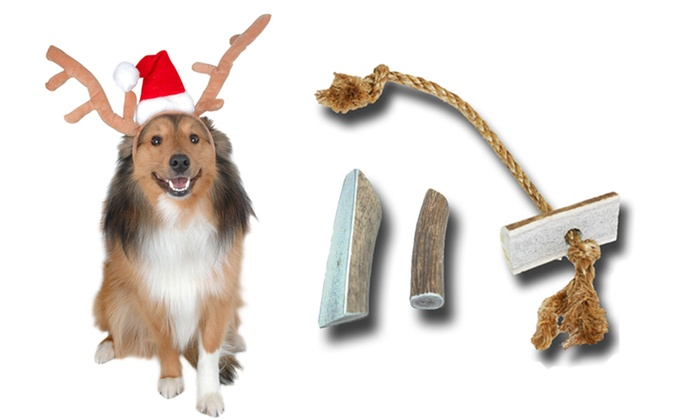 Buckey Bites Antler Chew-Toy Holiday Set: Buckey Bites Holiday Gift Set for Small or Large Dogs. Free Returns.