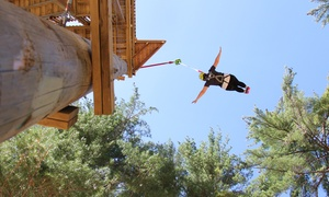 Muskoka Zip Lines & Aerial Park: Jump Tower Experience and Sportsland Tickets at Muskoka Zip Lines & Aerial Park (Up to 51% Off)