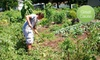 (G-Team) Community CROPS: $10 Donation to Help Water Community Gardens