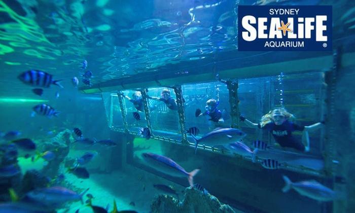 sea sydney aquarium in harbour nsw groupon