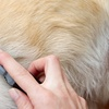 Up to 54% Off Dog Grooming and Oral Care