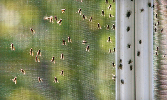 Florida Pest & Lawn - Orlando: One Pest-Control Treatment or Three Months of Pest-Control Treatments from Florida Pest & Lawn (Up to 81% Off)