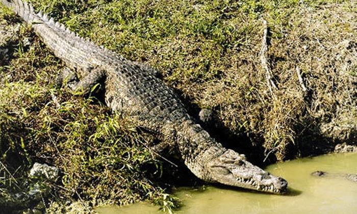Everglades Alligator Farm - Everglades: Alligator Show and Airboat Ride for Two or Four Adults at Everglades Alligator Farm (Half Off)