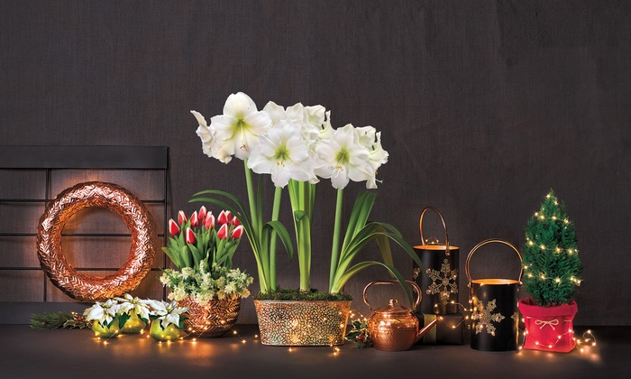 Jackson & Perkins: Garden Plants and Accessories at Jackson & Perkins (50% Off). Two Options Available.