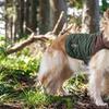 Eddie Bauer Quilted Dog Coat with Suede Shotgun Patch