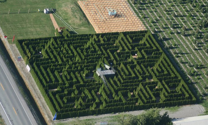 Lenning Farms: The Berry Barn - La Conner: Hedge-Maze Experience for Two or Four at The Berry Barn (40% Off). 12 Options Available.