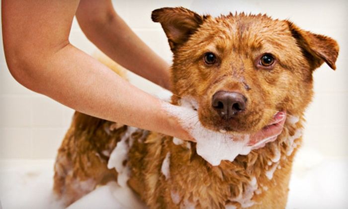 Soggy Paws Omaha - Old Market: Three or Five Days of Pet Daycare or $15 for $30 Worth of Pet Services at Soggy Paws Omaha