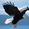 Up to 58% Off a Skagit River Bald Eagle Raft Trip