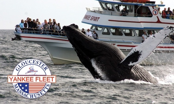 Yankee Fleet - Gloucester: $25 for a Four-Hour Whale-Watching Tour from Yankee Fleet ($45 Value)