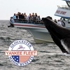 $25 for a Whale-Watching Tour