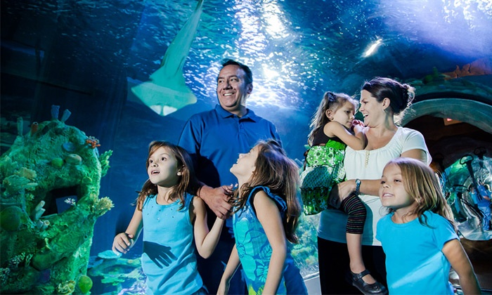 Sea Life Arizona Aquarium - Sea Life Arizona: Visit for Two or Four and One Guidebook at Sea Life Arizona Aquarium (Up to 41% Off)
