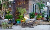 Maas Nursery - Surf Oaks: Plants and Gardening Supplies at Maas Nursery in Seabrook (Half Off)