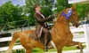 Ramblewood Farm - Bellbrook: $35 for Two Horse-Riding or Driving Lessons at Ramblewood Farm in Spring Valley ($80 Value)