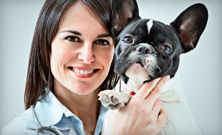 Two Nights of Boarding for a Dog or Cat - Kindred Spirits Animal Clinic in Orlando