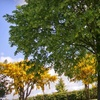 51% Off Lawn, Landscaping, and Tree Services