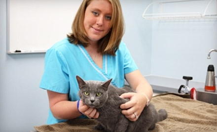 PetCare Animal Hospital - PetCare Animal Hospital in Loveland