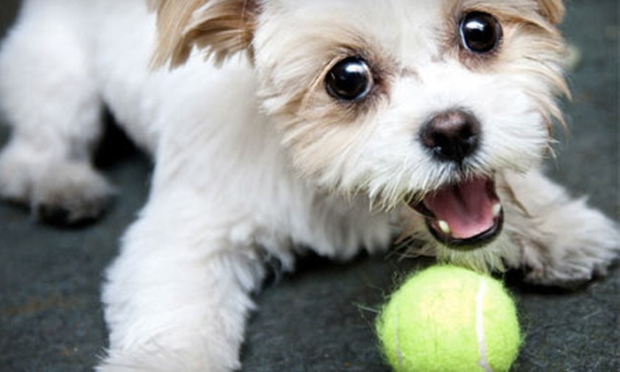Pupparazzi - Las Vegas: $60 for a Dog Photo Shoot and an Image CD from Pupparazzi ($175 Value)