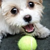 Pupparazzi: $60 for a Dog Photo Shoot and an Image CD from Pupparazzi ($175 Value)