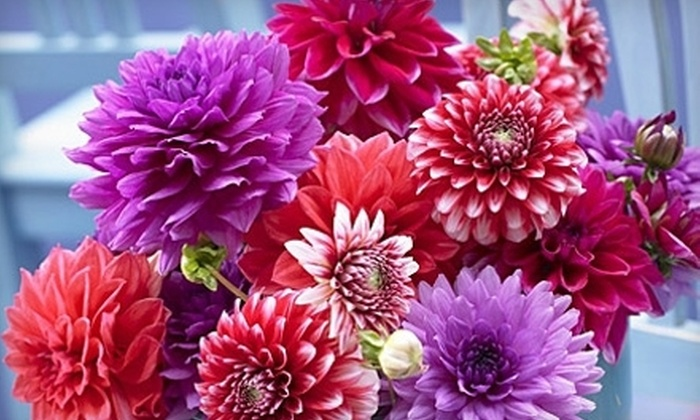 American Meadows: $25 for a Southeast Summer Blooms Kit from American Meadows ($75 Value)