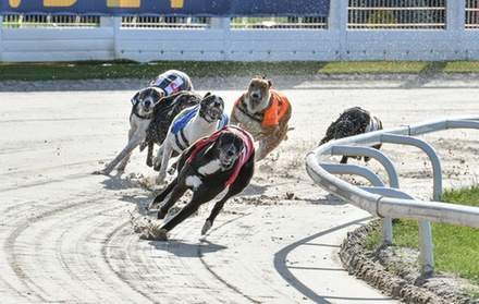 Greyhound Racing with Food, Drink, Programme and £2 Bet for Up to Ten at Towcester Racecourse