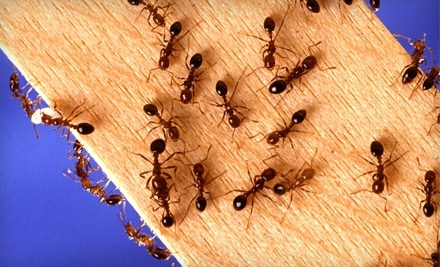 $200 Groupon to A American Pest Control - A American Pest Control in