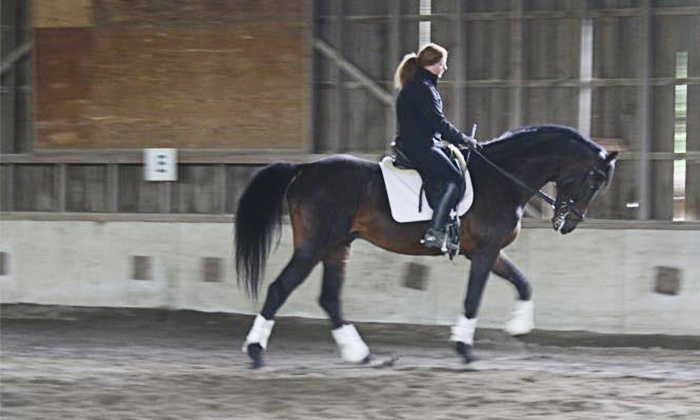 New York Dressage - Warwick: One or Three Private One-Hour Horseback-Riding Lessons at New York Dressage (Up to 67% Off)