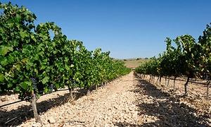 Bodegas Luzón: Visita guiada a las Bodegas Luzón, degustación de vinos y tapas y estuche regalo para 1, 2 o 4 desde 11,95 €
