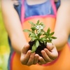 Half Off Plants and Gardening Tools