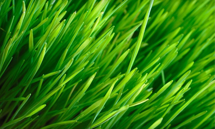 The Sod Father - Winnipeg: Lawn Maintenance and Spring Cleaning from The Sod Father  (Half Off). Four Options Available.