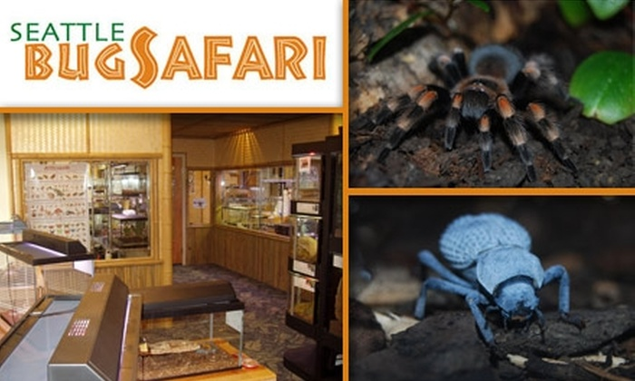 Seattle Bug Safari - Pike Place  Market: $4 for One-Day Admission to the Seattle Bug Safari