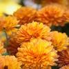 52% Off Plants at The Kelowna Flower Farm