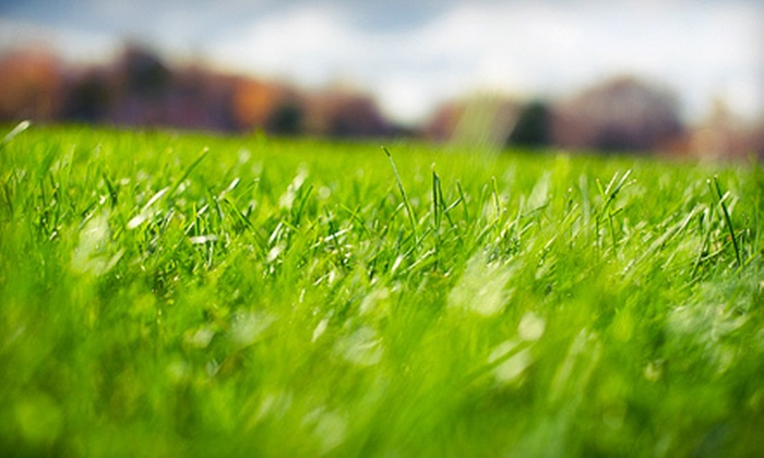 Lawn Creations - Toledo: One or Three Weed-and-Feed Treatments, Two Pest-Control Treatments, or Overseeding from Lawn Creations (Up to 54% Off)