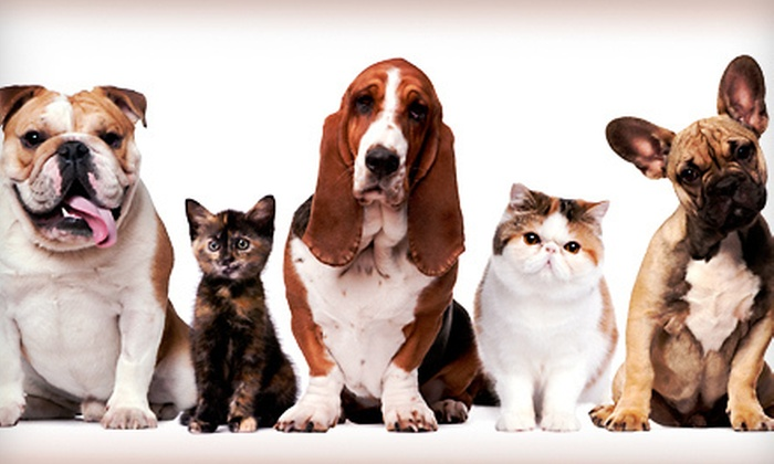 Petropolis Pet Center - Chesterfield: Five Days of Dog Daycare or $40 for $100 Worth of Dog or Cat Boarding at Petropolis Pet Center in Chesterfield