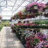 Half Off Plants and More in Furlong
