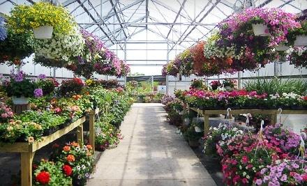 $30 Groupon to Froehlich's Farm & Garden Center - Froehlich's Farm & Garden Center in Furlong