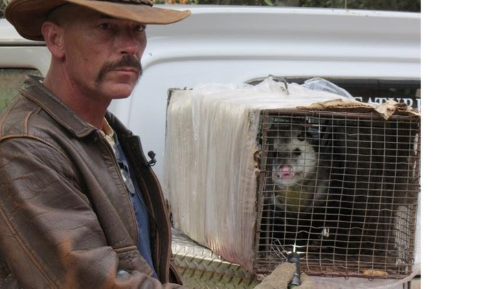 Creature Catcher's Wildlife Management - Sacramento: Two-Week Rodent-Trapping Program and Entry-Point Inspection from Creature Catcher's Wildlife Management (15% Off)