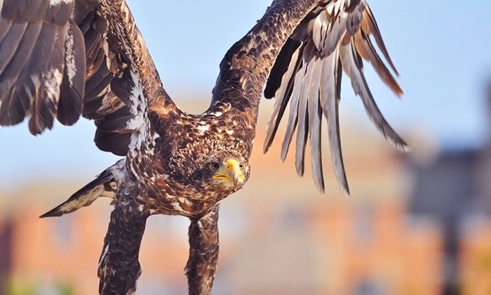 Ontario Falconry Centre - Hwy-2 & Hwy-57: Meet-and-Greet or Falconer for the Day Workshop at Ontario Falconry Centre (Up to 89% Off). 3 Options Available.
