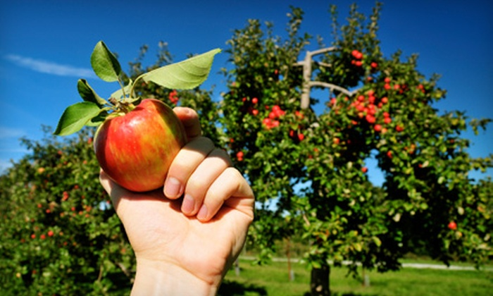 Wright's Farm - Gardiner: Day of Apple Picking for Two or Four at Wright's Farm in Gardiner