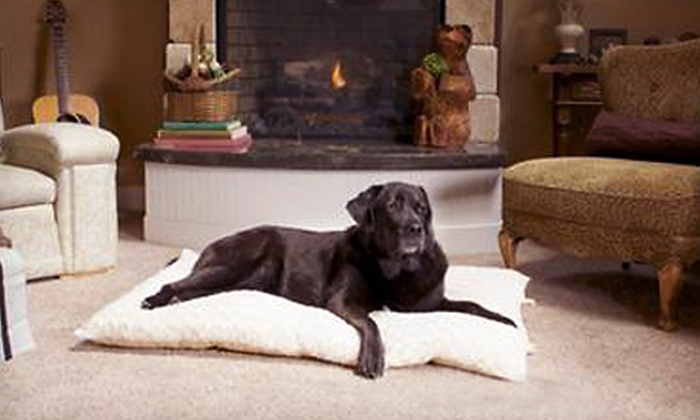 FurHaven Curly-Fur Dog Pillows: FurHaven Curly-Fur Plush Dog Pillows (Up to 62% Off). Multiple Sizes and Colors Available.