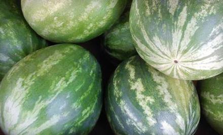 $14 Groupon to Woolbright Farmers Market - Woolbright Farmers Market in Boynton Beach