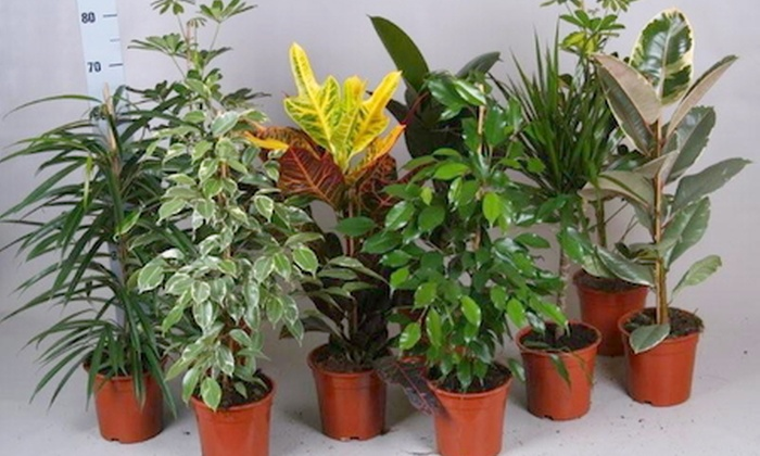 Set kamerplanten groupon goods for Achat plante verte en ligne