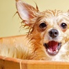 Up to 75% Off Dog Packages at Pet Set Spa