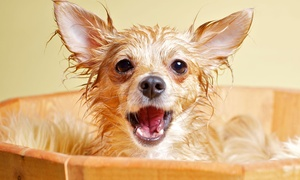 Max the Dog Wash: Do-It-Yourself Dog Washing, or Grooming for a Small, Medium, or Large Dog at Max the Dog Wash (Up to 56% Off)