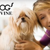 Half Off at Dog's Divine Pet Grooming