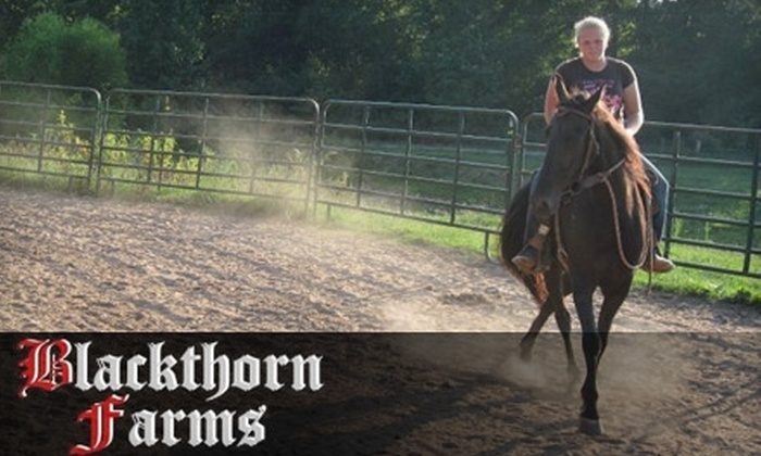 Blackthorn Farms - Silver City: $69 for Four Beginner Horseback-Riding Lessons at Blackthorn Farms in Cumming